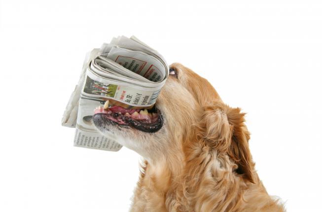 Collegamento a I medici veterinari di OVUD nel Veterinary Journal
